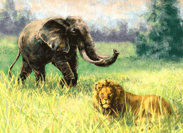 Como fue la creación de los animales